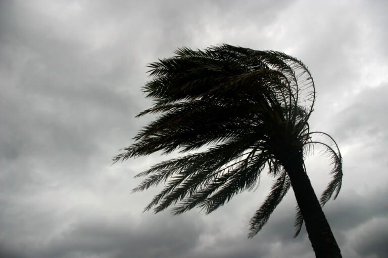 palm tree blowing during storm